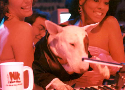 Spuds Mackenzie - Budweiser's Spuds Mackenzie plays keys on the set of ESPN's Lighter Side of Sports, Atlantic City